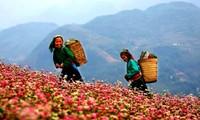 Meseta de piedra Dong Van registra aumento drástico del número de turistas