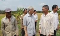 Líder partidista revisa trabajos de lucha contra salinización en Ben Tre