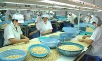Anacardo trae nueva perspectiva para la exportación de productos agrícolas de Vietnam en 2016