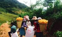Publican informe sobre condiciones vitales de minorías étnicas vietnamitas en 2015