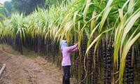Hau Giang se esfuerza por lograr 70% de agricultores exitosos