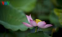 Flores de loto destacan singularidad vietnamita en uniformes de APEC 2017