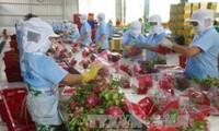 Promocionan el tratado de Libre Comercio Vietnam-Unión Europea