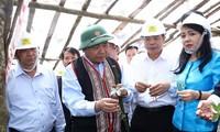 Ginseng Ngoc Linh es tesoro de Vietnam, afirma el jefe del Gobierno