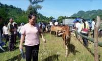 Vietnam determinado a reducir brecha de pobreza entre zonas y grupos poblacionales