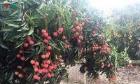 Conexión, un factor decisivo para el desarrollo agrícola de Vietnam