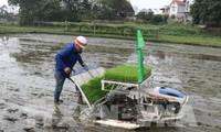 Reanudan producción agrícola en localidades vietnamitas tras días feriados del Tet