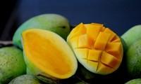 Vietnam logra permiso de exportación de mangos a Estados Unidos