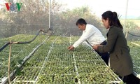 La agricultura inteligente llega a Tay Nguyen