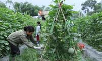 Agricultura vietnamita recibió en últimos 20 años cuantiosa ayuda oficial para el desarrollo