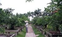 Aldea de bonsái de Vi Khe