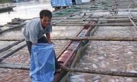 ใช้ศักยภาพผิวน้ำเพื่อพัฒนาการเพาะเลี้ยงสัตว์น้ำอย่างยั่งยืน