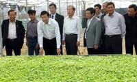 ประธานประเทศเจืองเติ๊นซางชื่นชมโครงการเกษตรที่ใช้เทคโนโลยีขั้นสูงในจังหวัดเลิมด่ง