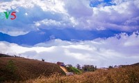 เขตตะวันตกเฉียงเหนือยามวสันต์ ทะเลเมฆ แดนสวรรค์แห่งหนึ่งของเวียดนาม