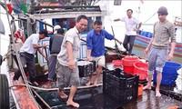 ชาวประมงจังหวัดกว๋างจิออกทะเลจับปลาได้ผลดีนำโชคมาให้แก่ปีใหม่ประเพณี