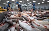 ไทยนำเข้าปลาสวายจากเวียดนามมากที่สุดในอาเซียน