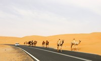 Arab states cooperate with China on One Belt, One Road