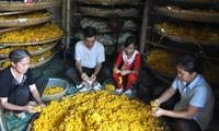 Nghề trồng dâu nuôi tằm ở Thiệu Hóa, Thanh Hóa