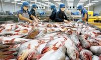 Xuất khẩu cá tra cán đích gần 2,3 tỷ USD