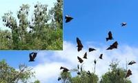 Bảo tồn và sử dụng bền vững tài nguyên động vật hoang dã ở Việt Nam