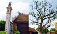 หมู่บ้านโบราณหว่างมายของกรุงฮานอย