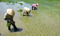ธนาคารโลกสนับสนุนเวียดนามในการเปลี่ยนแปลงใหม่การเกษตร