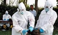 ความพยายามในการป้องกันโรคไข้หวัดนกเอH5N1และโรคไข้หวัดใหญ่H1N1