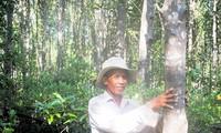 """Đồng quản lý rừng ngập mặn giúp khôi phục """"lá chắn"""" xanh ven biển"""