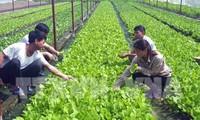 Phát triển nông nghiệp ứng dụng công nghệ cao - giải pháp  thích ứng với biến đổi khí hậu