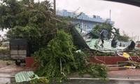 Khẩn trương tái thiết sau cơn bão Damrey
