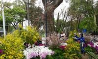 Cận cảnh chuẩn bị Lễ hội hoa anh đào 2018 tại Hà Nội