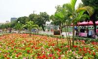Phố đi bộ Trịnh Công Sơn, không gian văn hóa, nghệ thuật mới ở Hà Nội