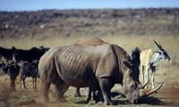 Giới thiệu cuộc thi phim ngắn về phòng chống buôn bán trái phép động vật hoang dã