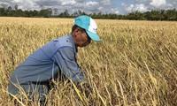 Thủ tướng Nguyễn Xuân Phúc chủ trì họp về giải pháp tạm trữ lúa gạo
