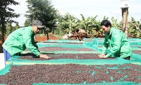 Nâng cao giá trị cây cà phê và phát triển vùng kinh tế Tây Nguyên