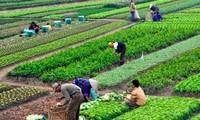 Nông nghiệp hữu cơ - gốc rễ của An toàn thực phẩm, xu hướng của Nông nghiệp thông minh