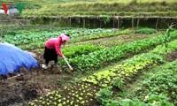 Хоанг Тхи Кан успешно ведёт семейное хозяйство несмотря на многочисленные трудности