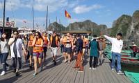 新年期间游览下龙湾的游客超过2.6万
