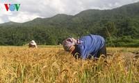 越南呼吁伙伴方继续合作帮助越南减贫