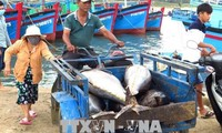 CPTPP对越南农民和渔民产生积极影响