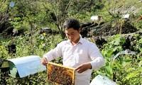 无公害蔬菜种植和蜜蜂养殖模式帮助河江省农民脱贫