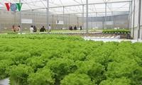 促进企业投资农业