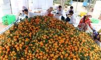 越南致力于促进生产和国内市场开发
