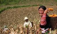 Kon Tum: Nghị quyết 30A tạo động lực giảm nghèo nhanh và bền vững