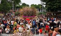 Lễ hội hoa Anh đào Nhật Bản - Hà Nội 2019 thu hút khoảng 1 triệu du khách