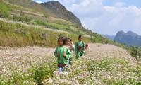 Время цветения гречихи в провинции Хазянг