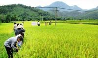 Провинция Баккан максимально использует свои преимущества в области сельского хозяйства