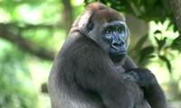 เยาวชนส่งเสริมกิจกรรมปกป้องสัตว์ป่า