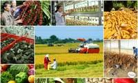 เวียดนามปรับปรุงโครงสร้างหน่วยงานการเกษตรเพื่อผสมผสานและพัฒนา