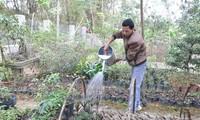 เกษตรกรเมืองซาปาสร้างฐานะจากการปลูกพืชสมุนไพร